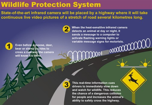 Wildlife Protection System